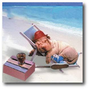sommerferie citater Rejse | Gør en stor positiv forskel sommerferie citater