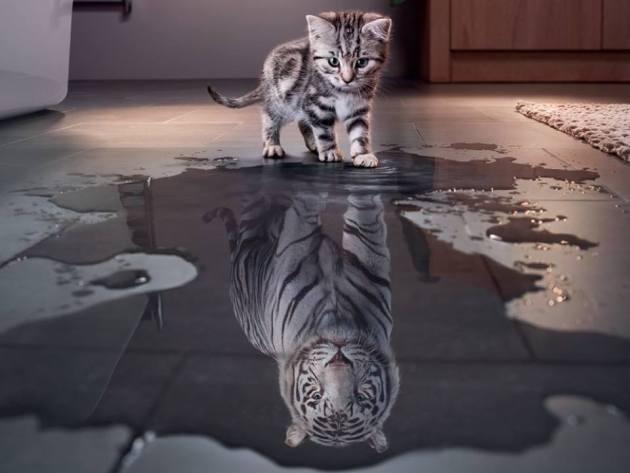 tiger mis