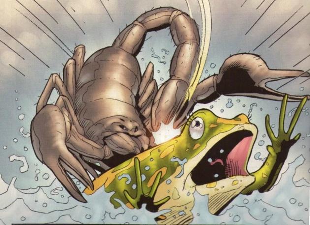 frøen og skorpionen